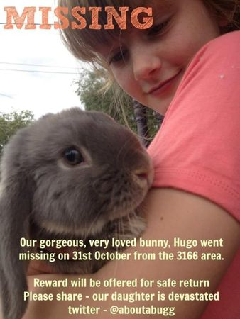 Hugo is missing, missing bunny, missing rabbit