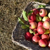 Country Life Apples